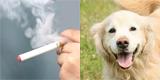 不動産管理会社様が悩むタバコ臭やペット臭・生活臭除去
