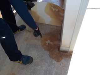 床材(CF)を剥がした際の床材裏と床の尿の浸み込み