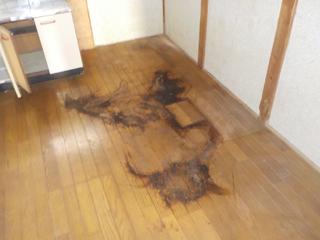 亡くなった個所の床撤去後