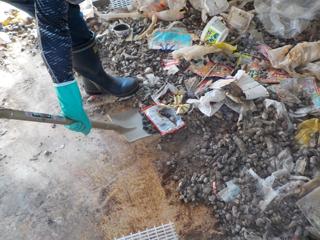 糞尿撤去の風景